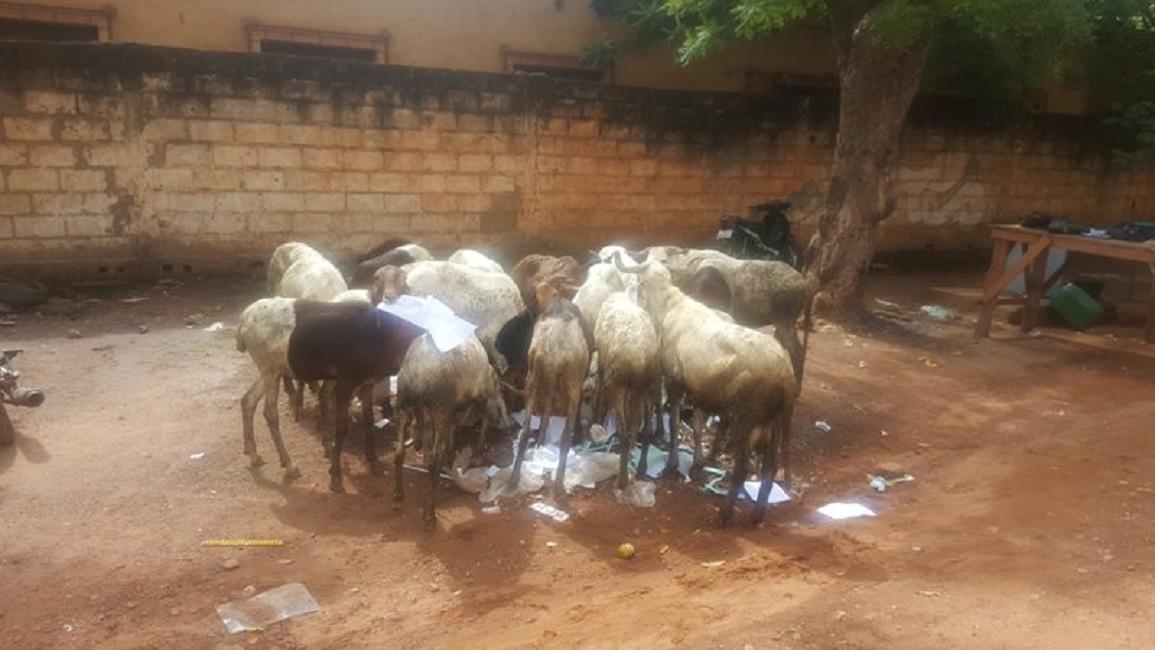 Les nouvelles du quartier: Prési au quartier nos moutons mangent papier.
