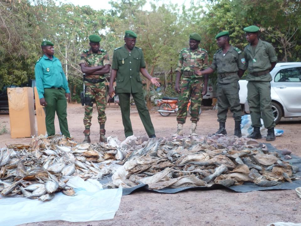 Oubritenga: 150 kg de viande d'hippopotame saisie à Boutenga