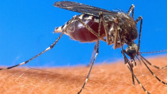 Santé: Un nouveau traitement contre le paludisme récurrent