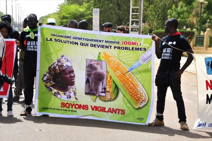 Burkina : controverse autour de moustiques OGM contre le paludisme