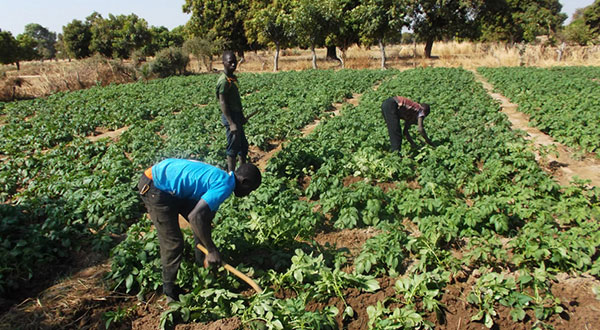Discours sur la Situation de la Nation: LE SECTEUR DE L'AGRICULTURE ET DE L'ELEVAGE