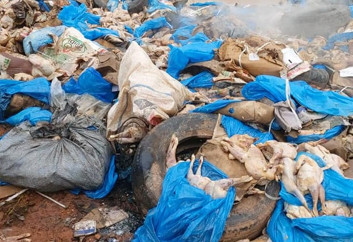 Ouagadougou: une autre cargaison de poulets impropres à la consommation jetée au secteur 29