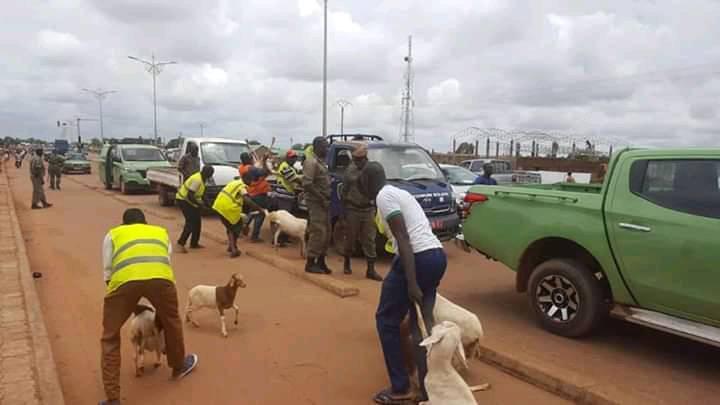 Ouagadougou: La police municipale en guerre contre  la divagation des animaux dans la ville